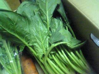 ベテラン野菜ホウレン草