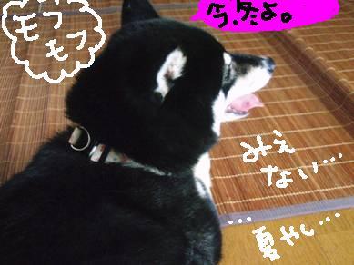 20070903_DSCF2494.jpg