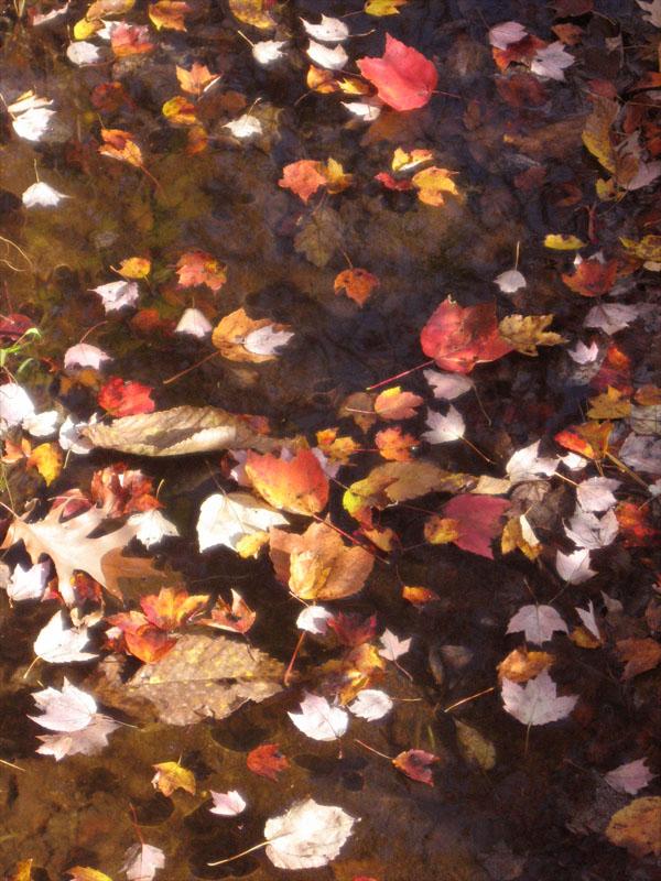 Boston2006_autumn01.jpg