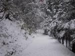 高山城跡-本丸への道1