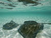 112170-FB~Two-Souswim