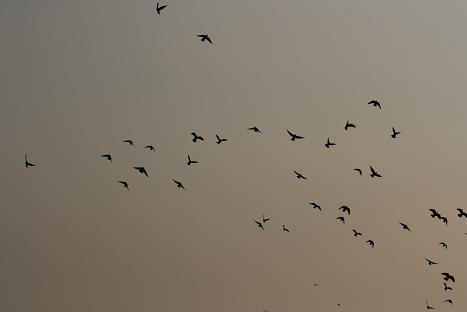 birdss.jpg