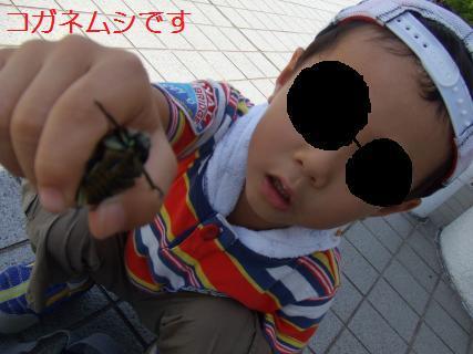 kenmoti10