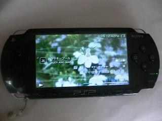 P1000376.jpg