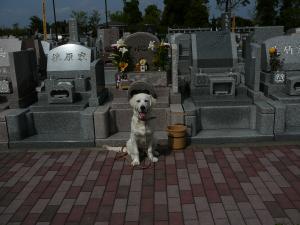 20090419お墓参り2