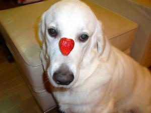 20090601鼻苺