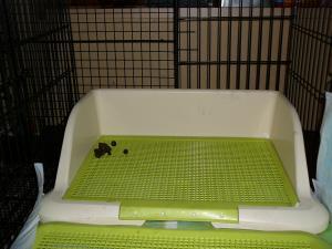 20090612トイレ