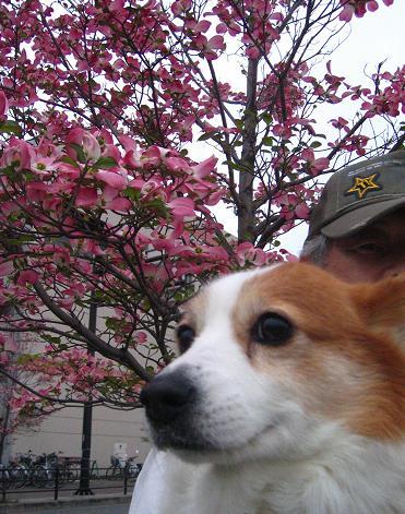 あらっ、どうして私の時は桜じゃないの~!!