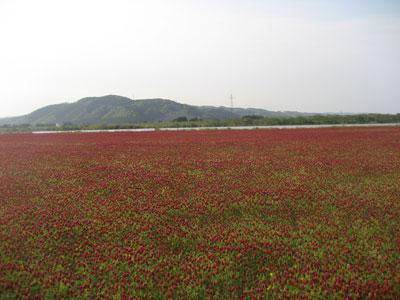 ストロベリーキャンドル畑