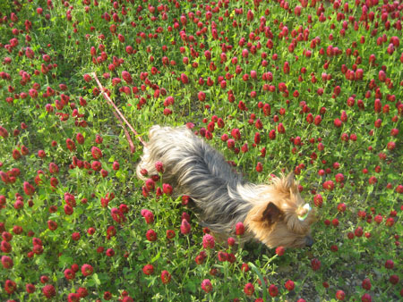 ストロベリーキャンドル畑と空