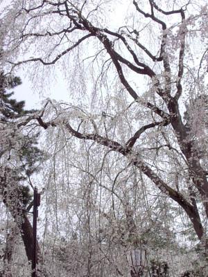 20070430_5.jpg