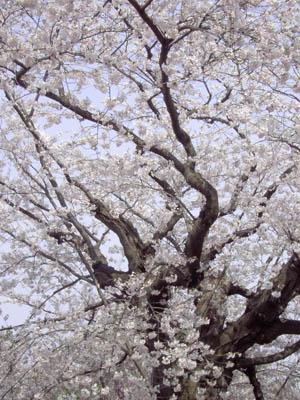 20070430_haru3.jpg