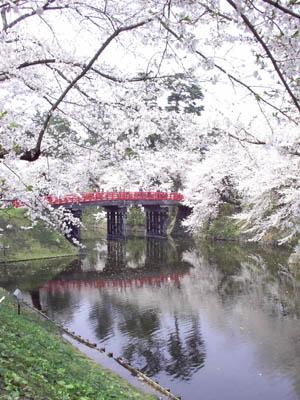 20070430_haru6.jpg