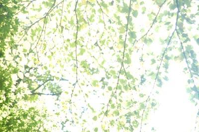 20070909_01.jpg