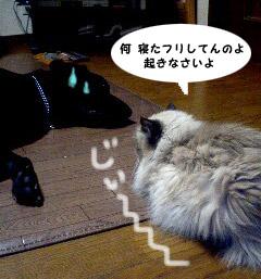 gyoushi.jpg