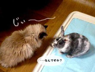 yonkoma1_1.jpg