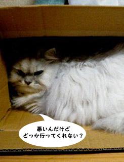 yonkoma2_2.jpg
