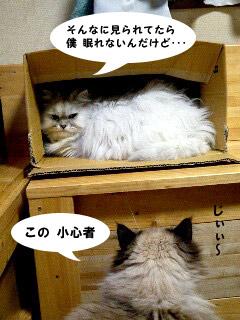 yonkoma2_3.jpg