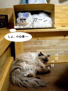yonkoma2_4.jpg