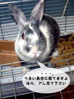 yonkoma3_2.jpg