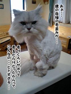 yonkoma5_1.jpg