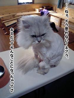 yonkoma5_2.jpg