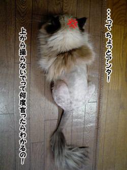 yonkoma5_4.jpg