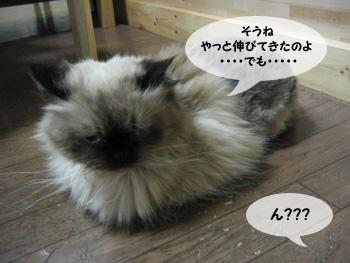 yonkoma7_3.jpg