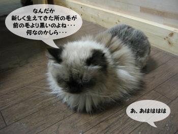 yonkoma7_4.jpg