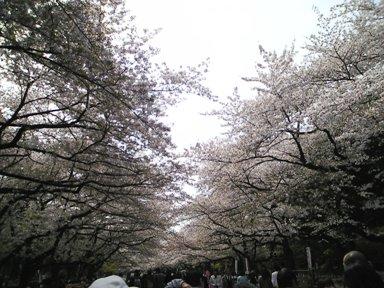107-1上野桜1
