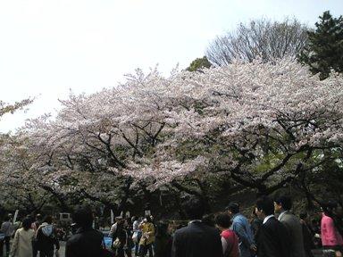 111-1上野桜2