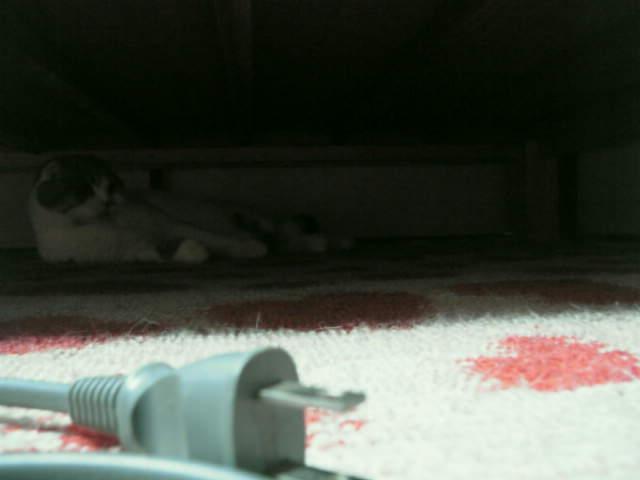 ベッドの下2
