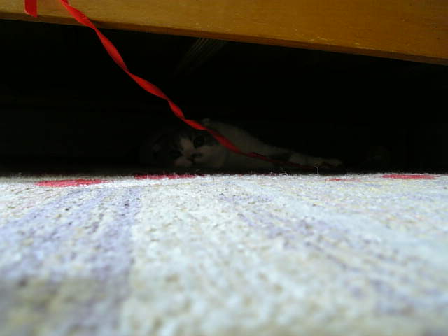 ベッドの下1