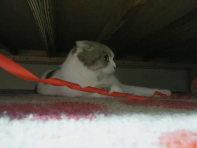 ベッドの下4