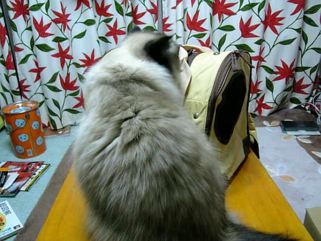 新しいバッグ