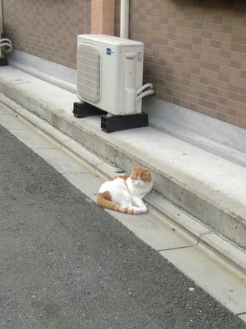 外猫さん?