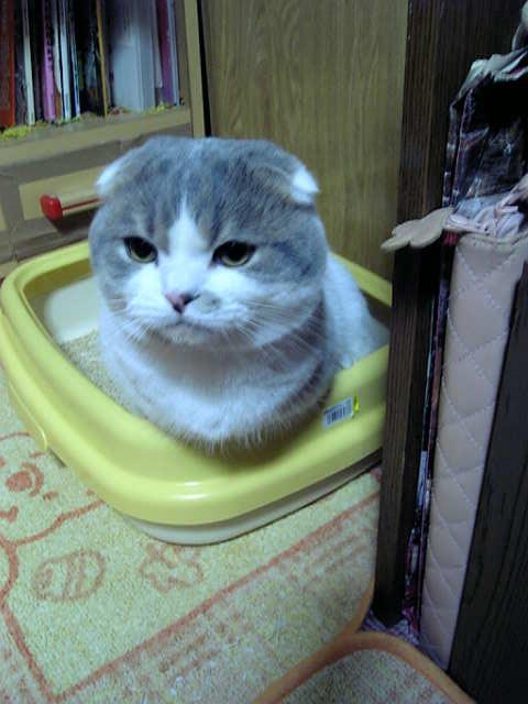 おトイレ中