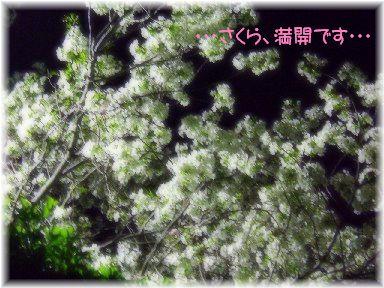 DSCF4195-sakura.jpg