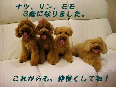 DSCF5620-aisatu.jpg