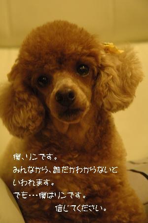 DSC_0069-RIN.jpg