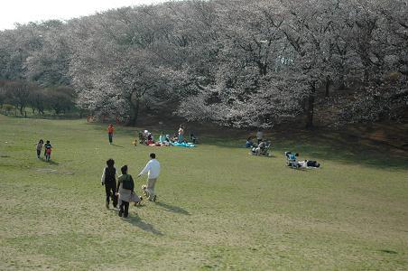 DSC_1810-sakura.jpg