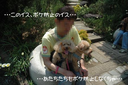 DSC_8288-bokeisu.jpg
