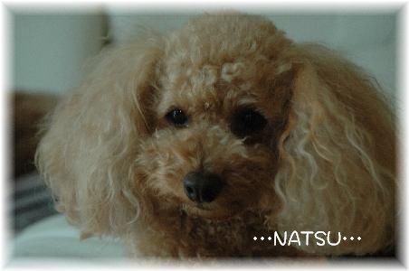 DSC_9379-natsuchan.jpg