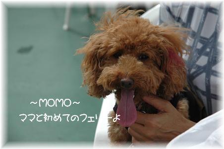 DSC_9700-momo.jpg