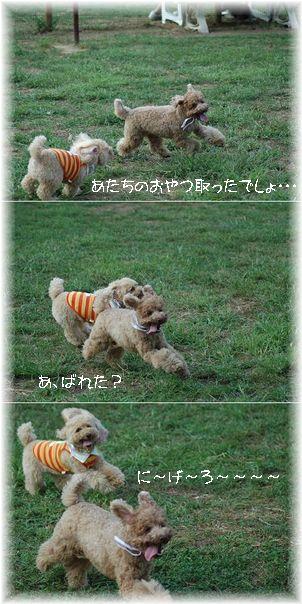 DSC_9860-3koma.jpg