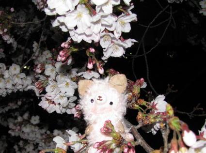sakurasakura2.jpg
