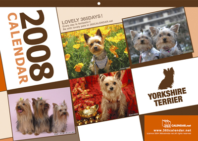 yorkshireterrier_08.jpg