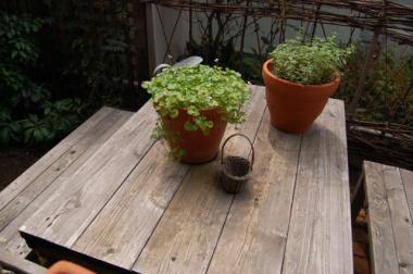 ガーデンテーブル上から