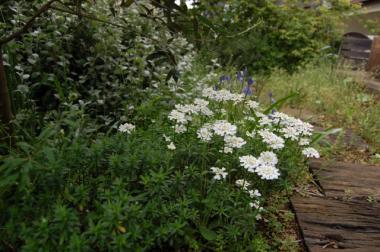 ワタシの庭