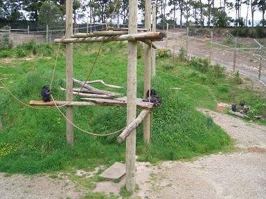 Hamilton Zoo5